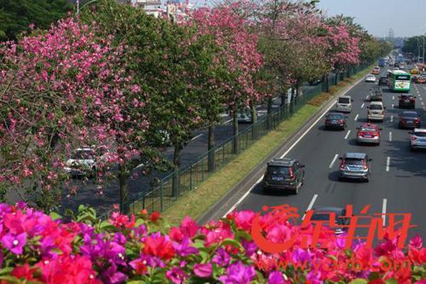 壁纸图片动态风景花树